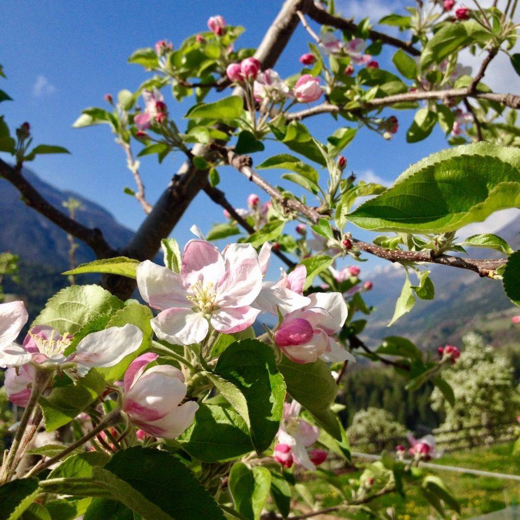 fiorinda-fioritura-festa-ilovevaldinon