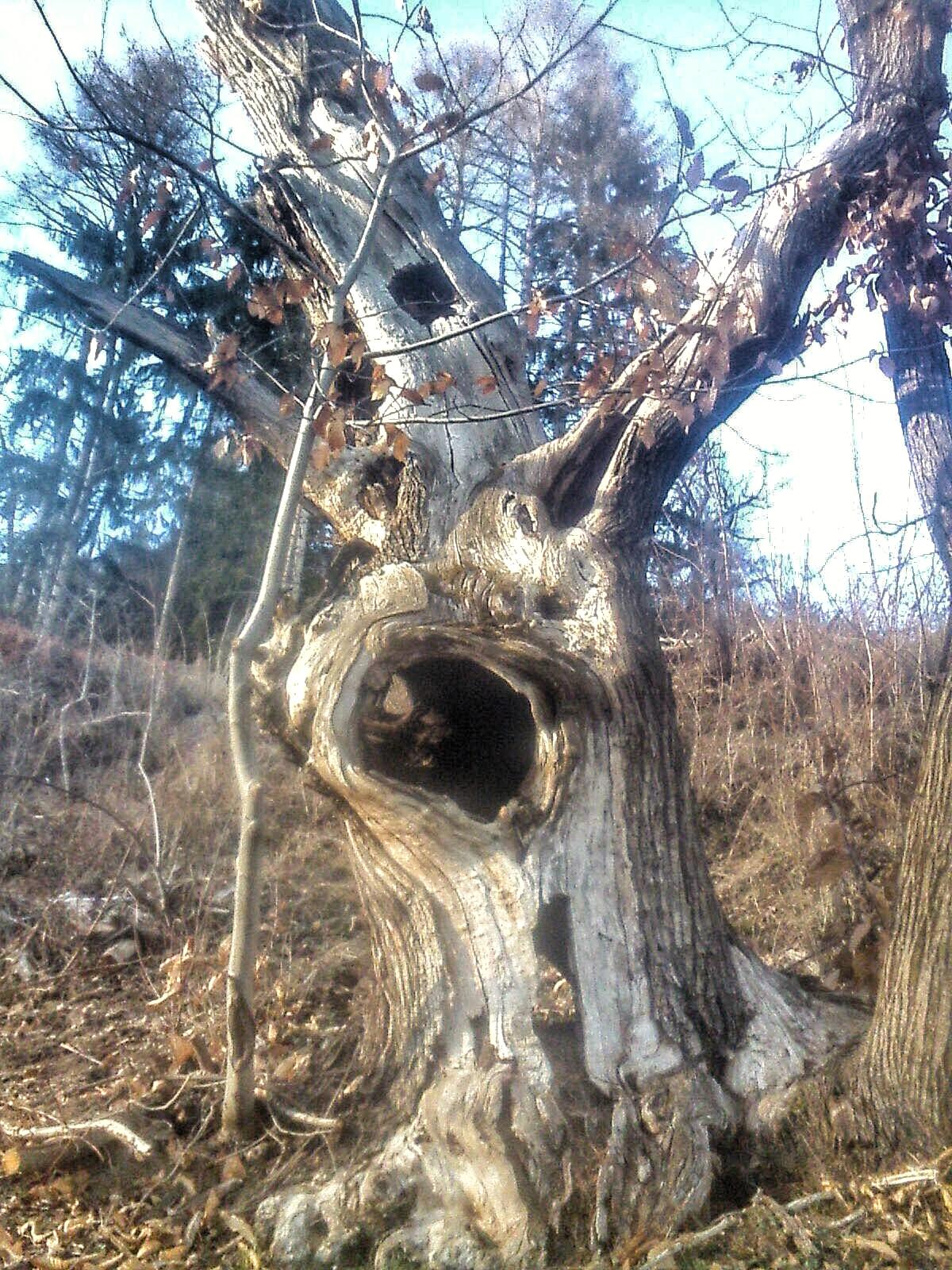alberi castagno Sara Filippi