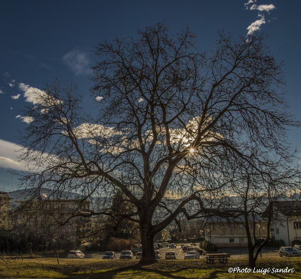 alberi noce di cles Luigi Sandri