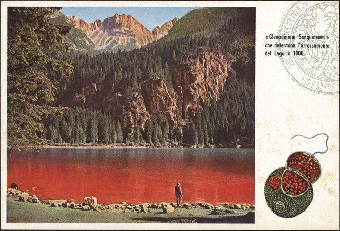 lago-di-tovel-lago-rosso-cartolina-1957-catinabib