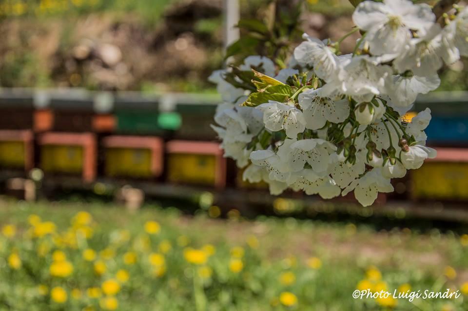 miele Val di Non - arnie fiori - Luigi Sandri