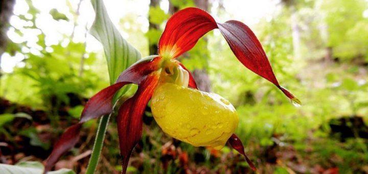 7 fiori di montagna che dovresti proprio conoscere for Fiori immagini e nomi