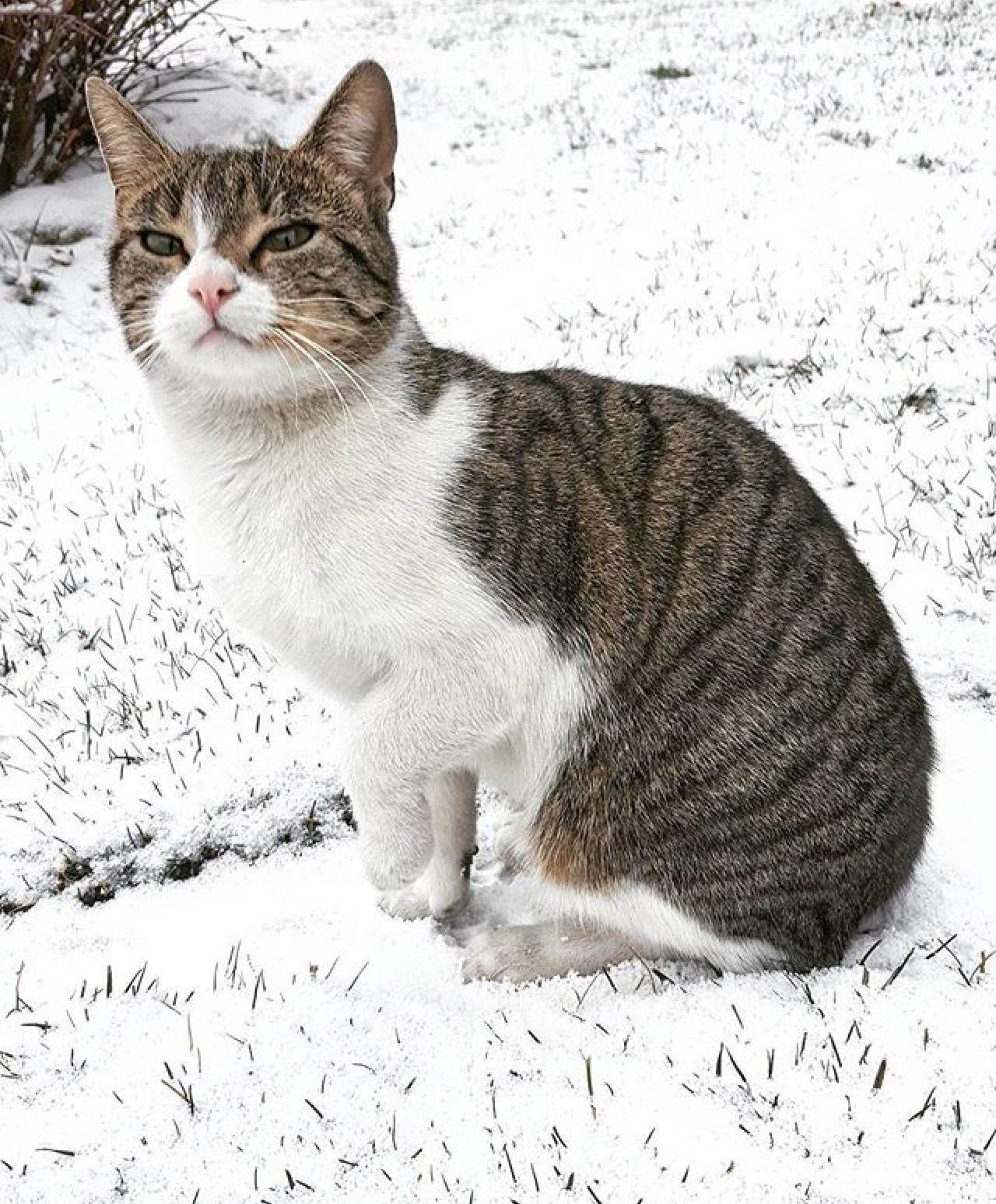neve-foto-gatto-alberto concini
