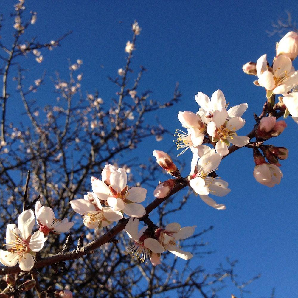 Alberelli da giardino fioriti perfect la primavera nel - Alberi frutto giardino ...