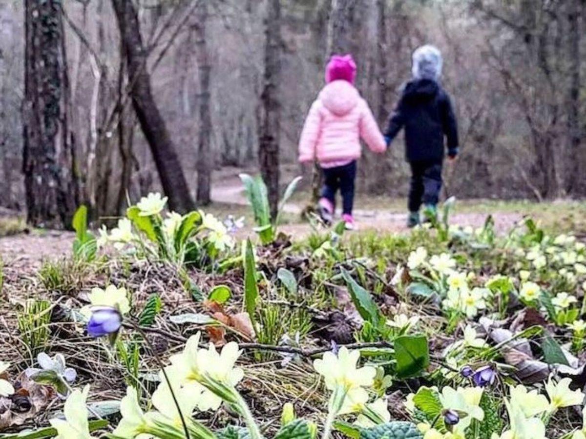 Fiori Gialli Bosco.3 Fiori Primaverili Che Sbocciano Nei Boschi Di Montagna In Primavera