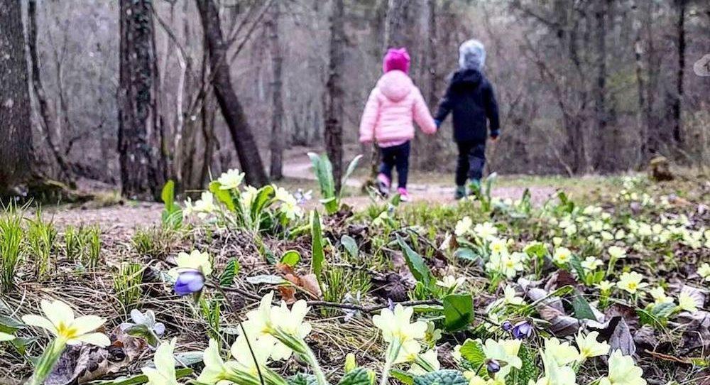 fiori primavera-passeggiata-marco formolo-i love val di non