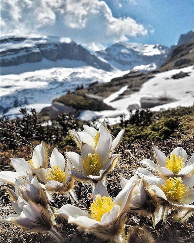 montagna in primavera-brenta-valentima martini