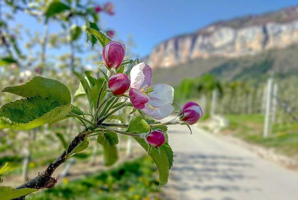 montagna in primavera-marco formolo-i love val di non