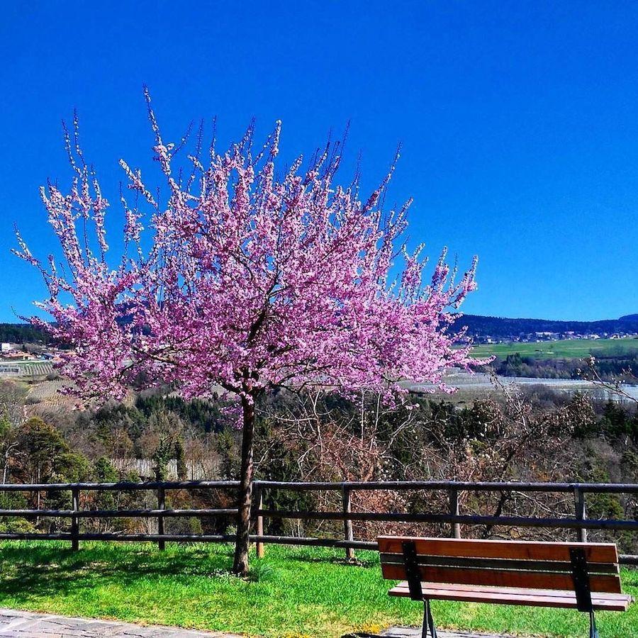 montagna-in-primavera-mary-pinamonti-ilovevaldinon
