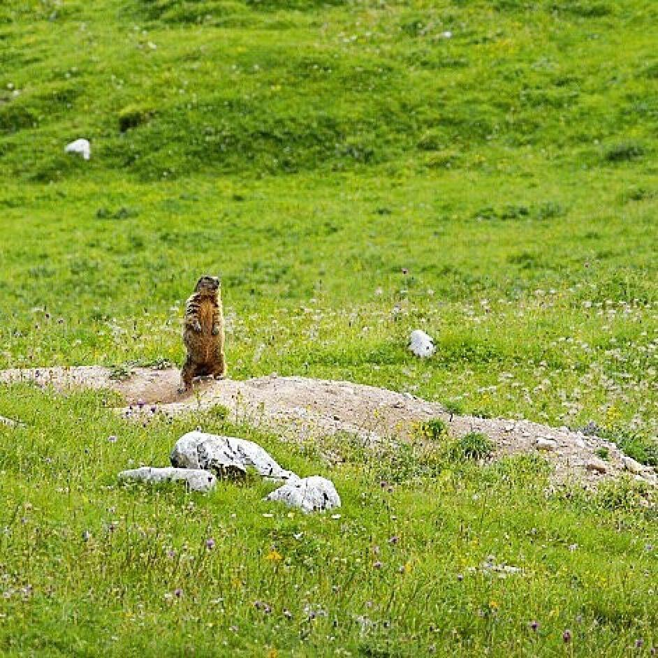 marmotta monte peller