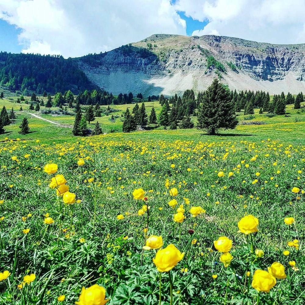 monte peller-fioritura