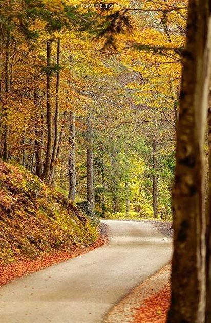foliage trentino alto adige