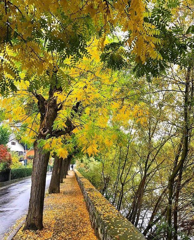 foliage trentino-bressanone