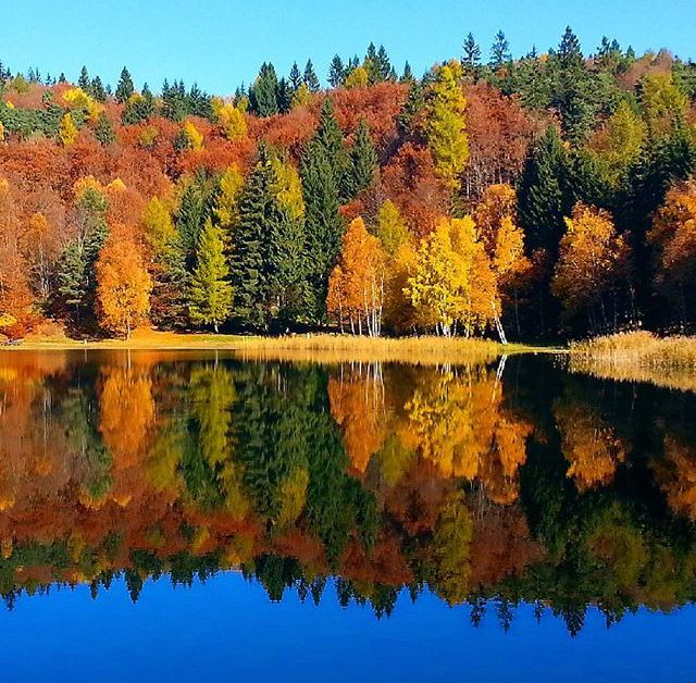foliage lago santo