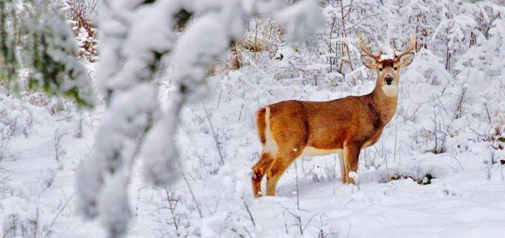 Sai riconoscere le impronte di animali nella neve - Foto di animali dell oceano ...