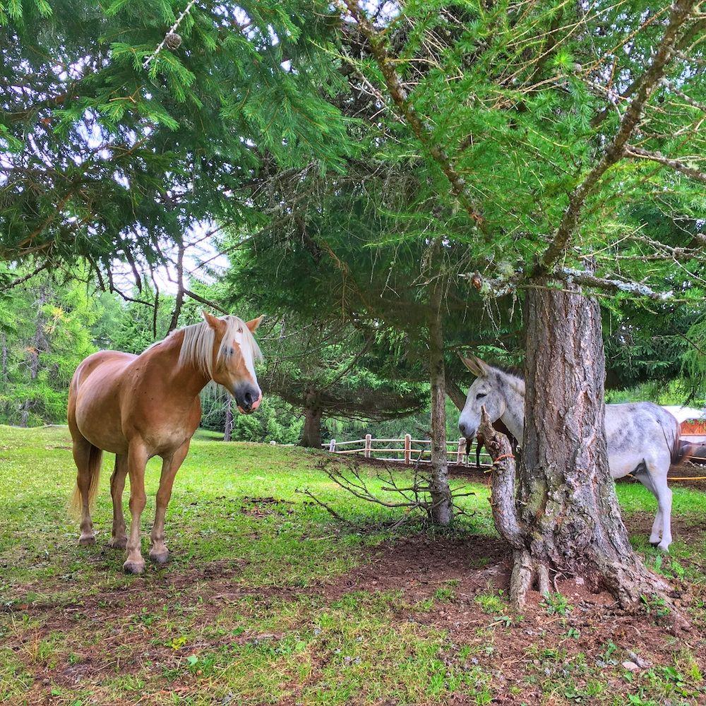 fine settimana in val di non-cavalli malga di coredo