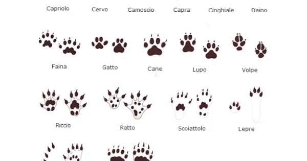 Sai riconoscere le impronte di animali nella neve for Lepre immagini da stampare