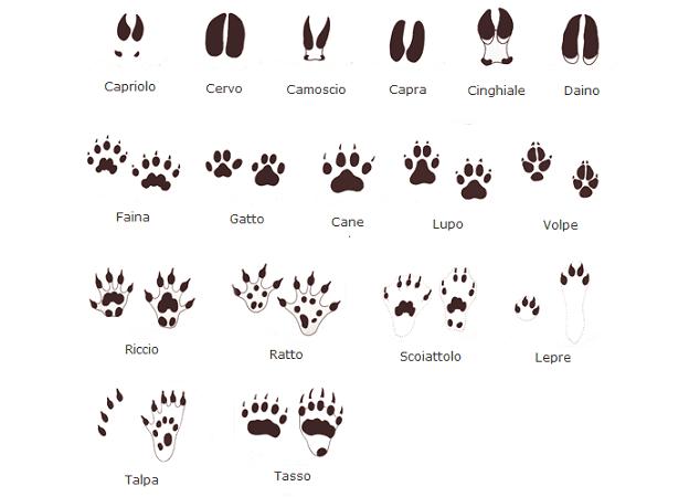 impronte di animali-disegno-giovanemarmotta.it