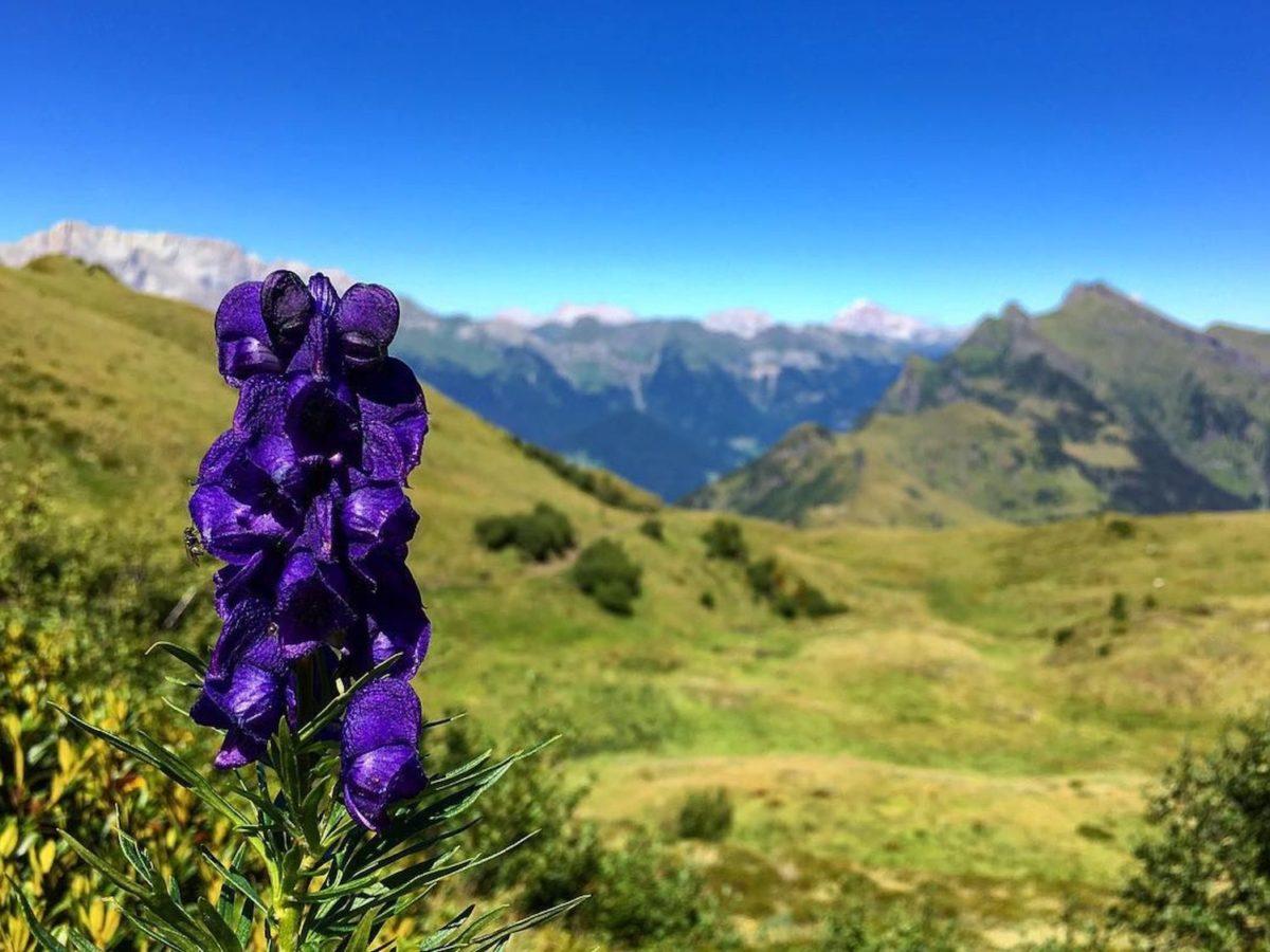 Fiori Da Giardino In Montagna 6 fiori velenosi che dovresti conoscere se vai in montagna