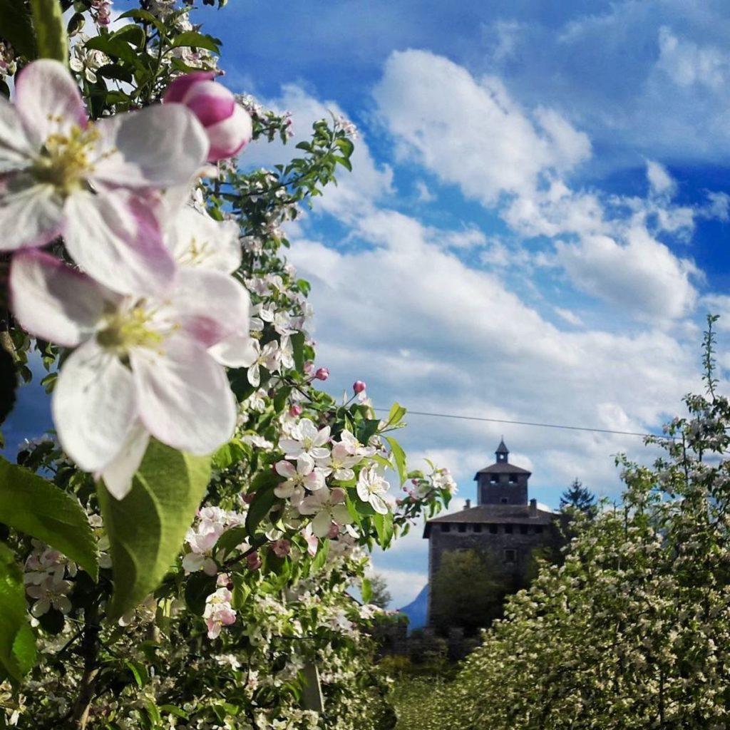 fioritura dei meli- primavera in val di non