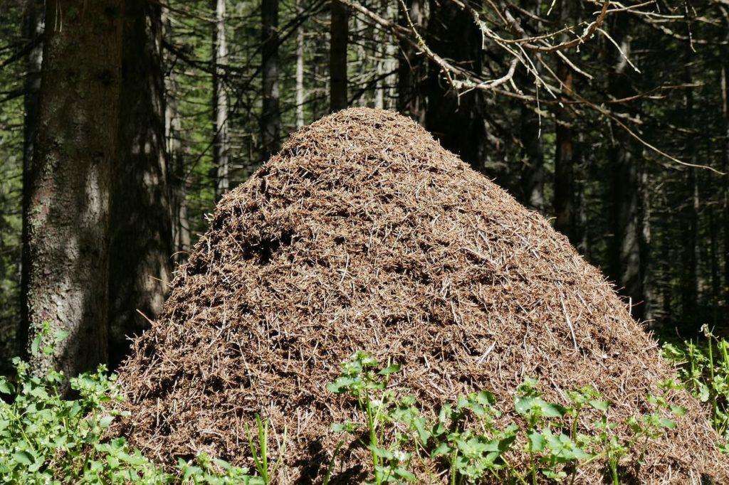 formicaio-nel-bosco