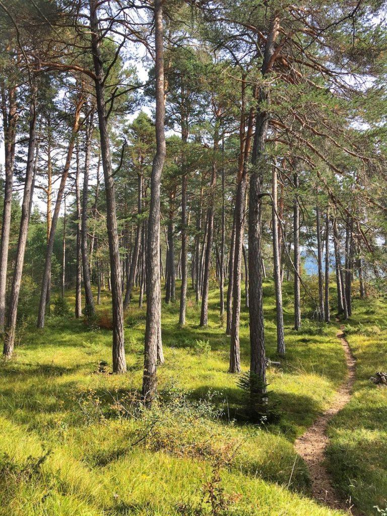 sentiero dell'erica-fondo-lago smeraldo