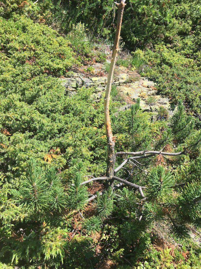 camminare nel bosco-cosa guardare-albero scortecciato