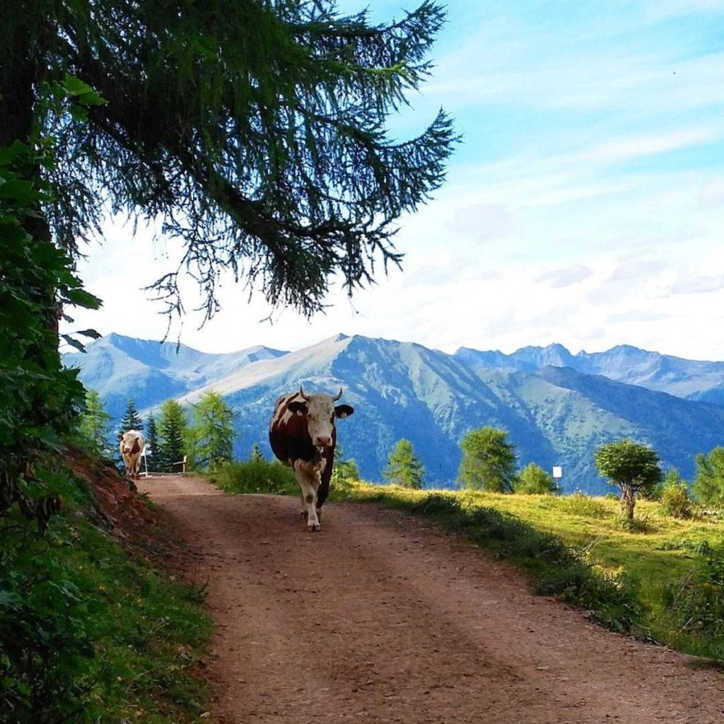 malga-clesera-giro del monte peller