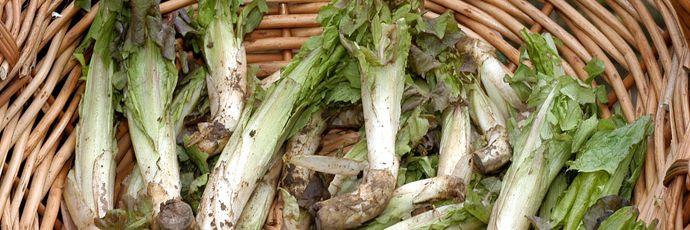 radic-di-mont-presidio slow food-erbe selvatiche commestibil