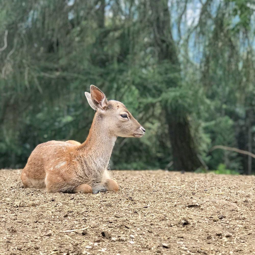 mondo degli animali-maso rainguthof