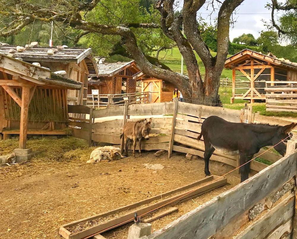 mondo degli animali-fattoria rainguthof