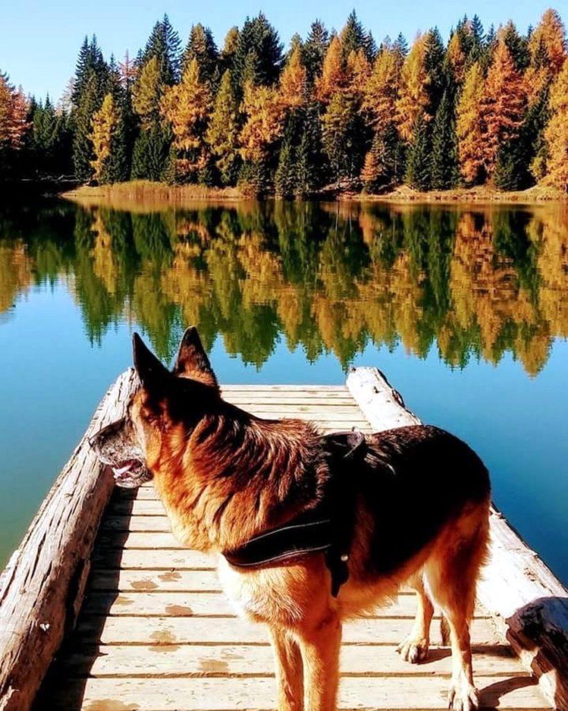 passeggiate d autunno in val di non-lago di tret
