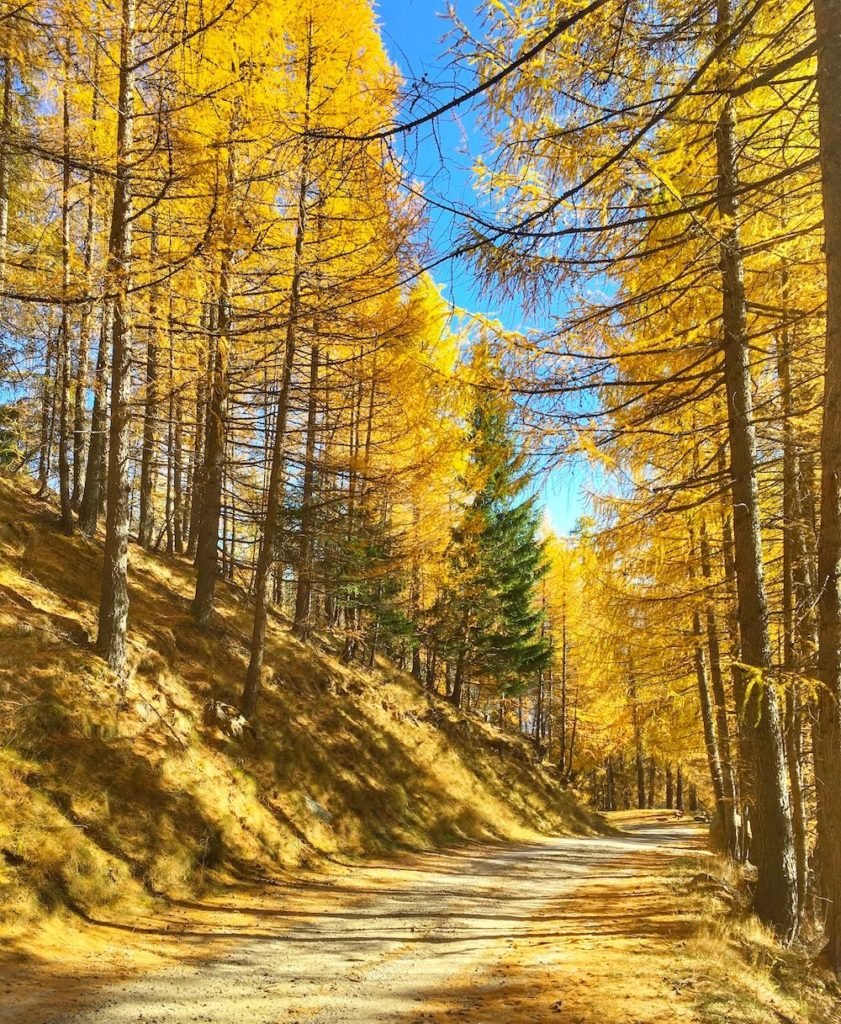 covel-foliage in val di sole