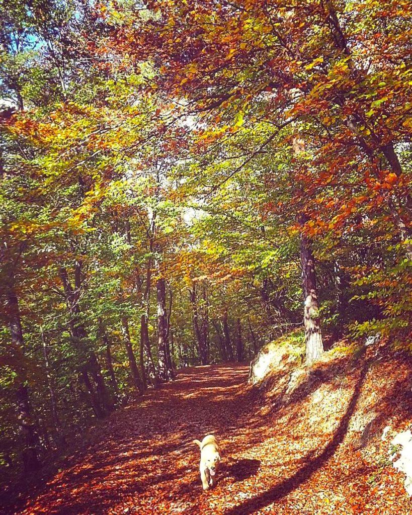 passeggiate d autunno in val di non-torre di visione