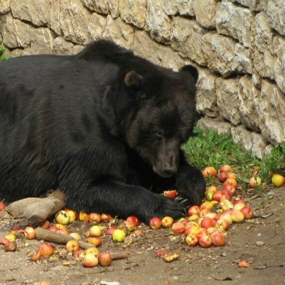 la storia di bruno-orso di san romedio-val di non