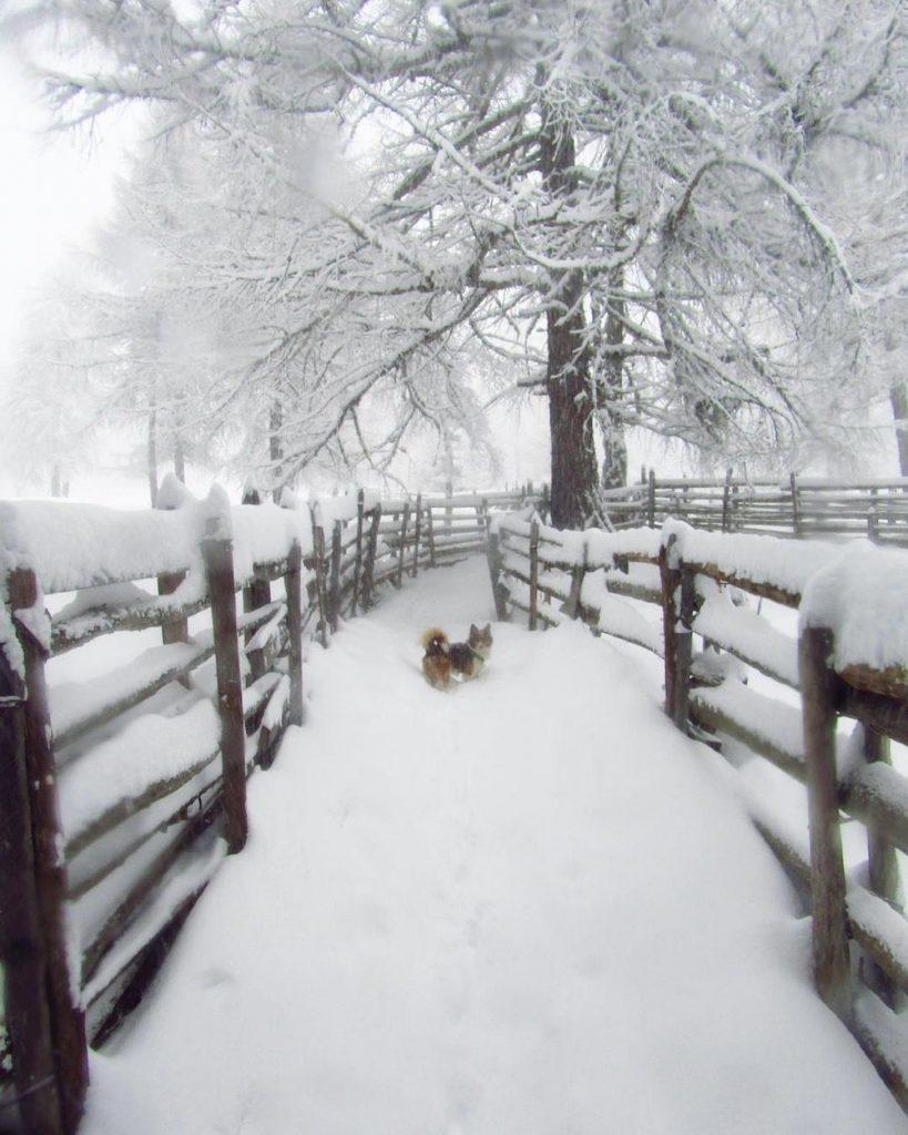 sentiero per il lago di Tret in inverno