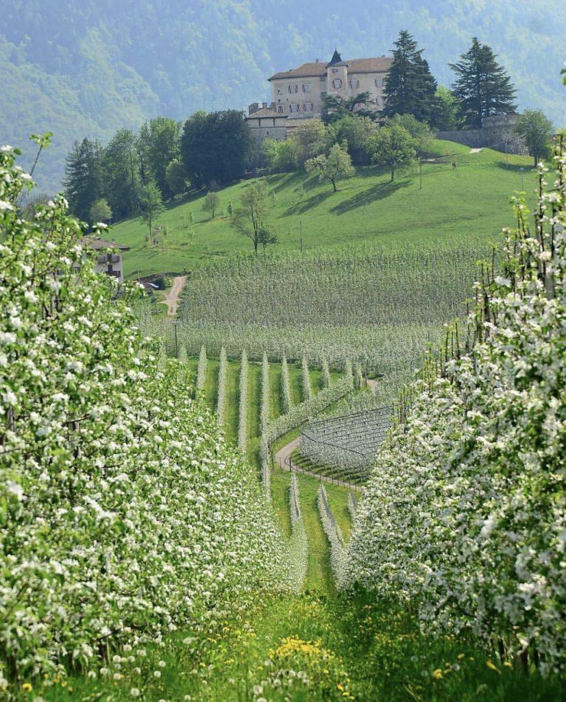 trentino alto adige in primavera-fioritura dei meli in Val di Non