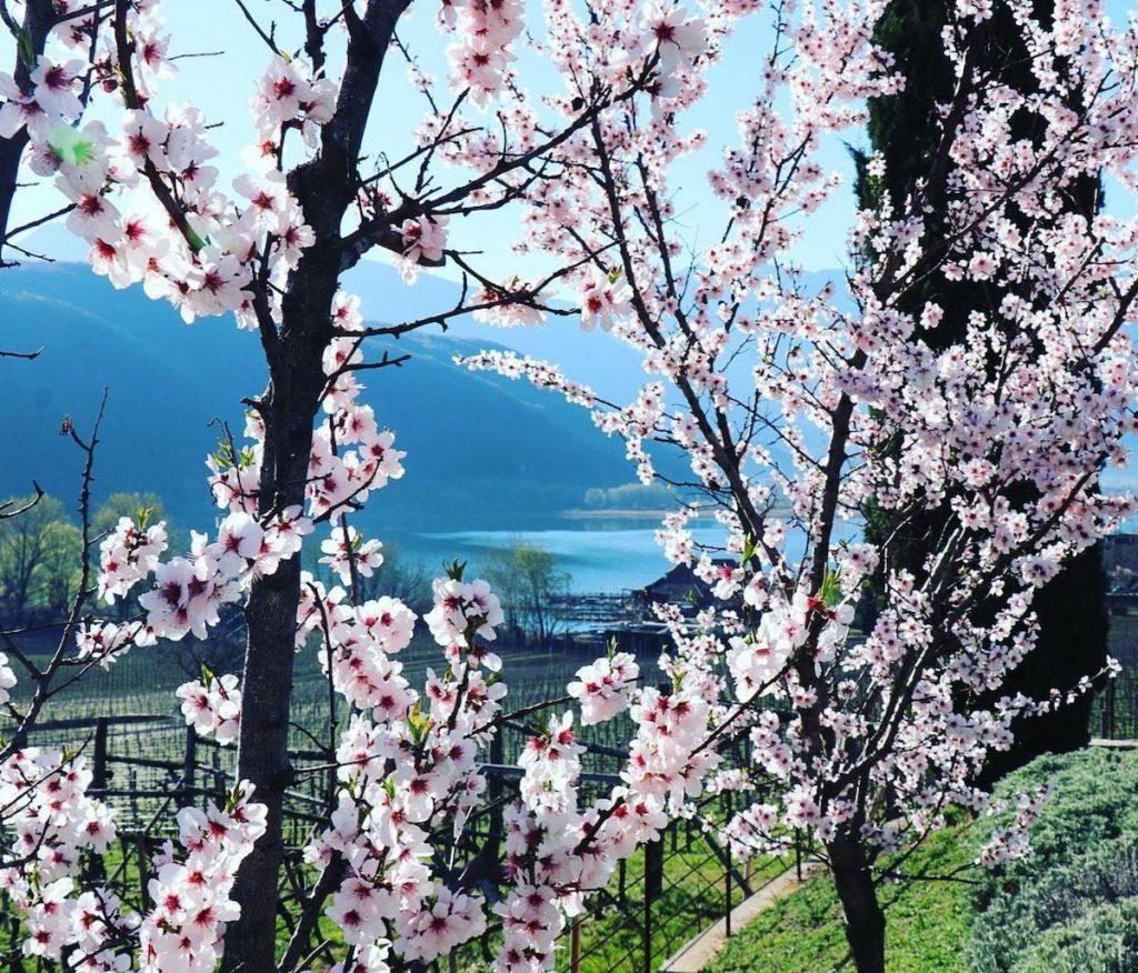 lago di caldaro primavera