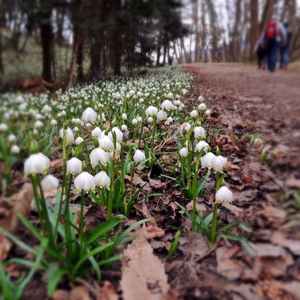 valle della primavera-trentino alto adige in primavera