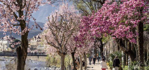merano in primavera