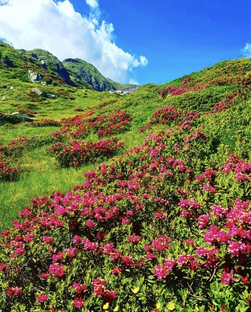 rododendri in fiore monte luco