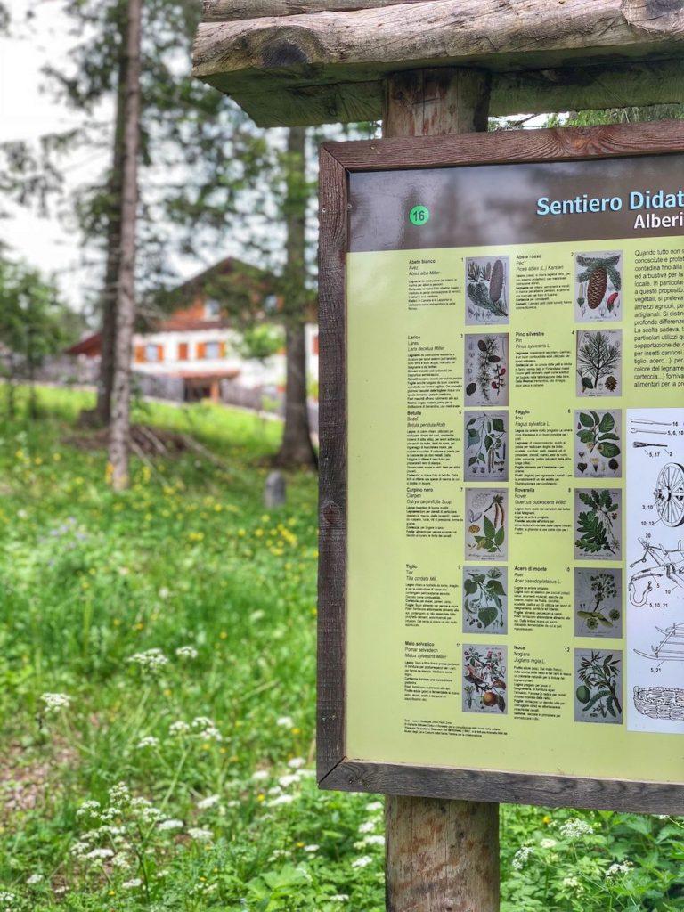 sentiero del bosco certificato-pannello