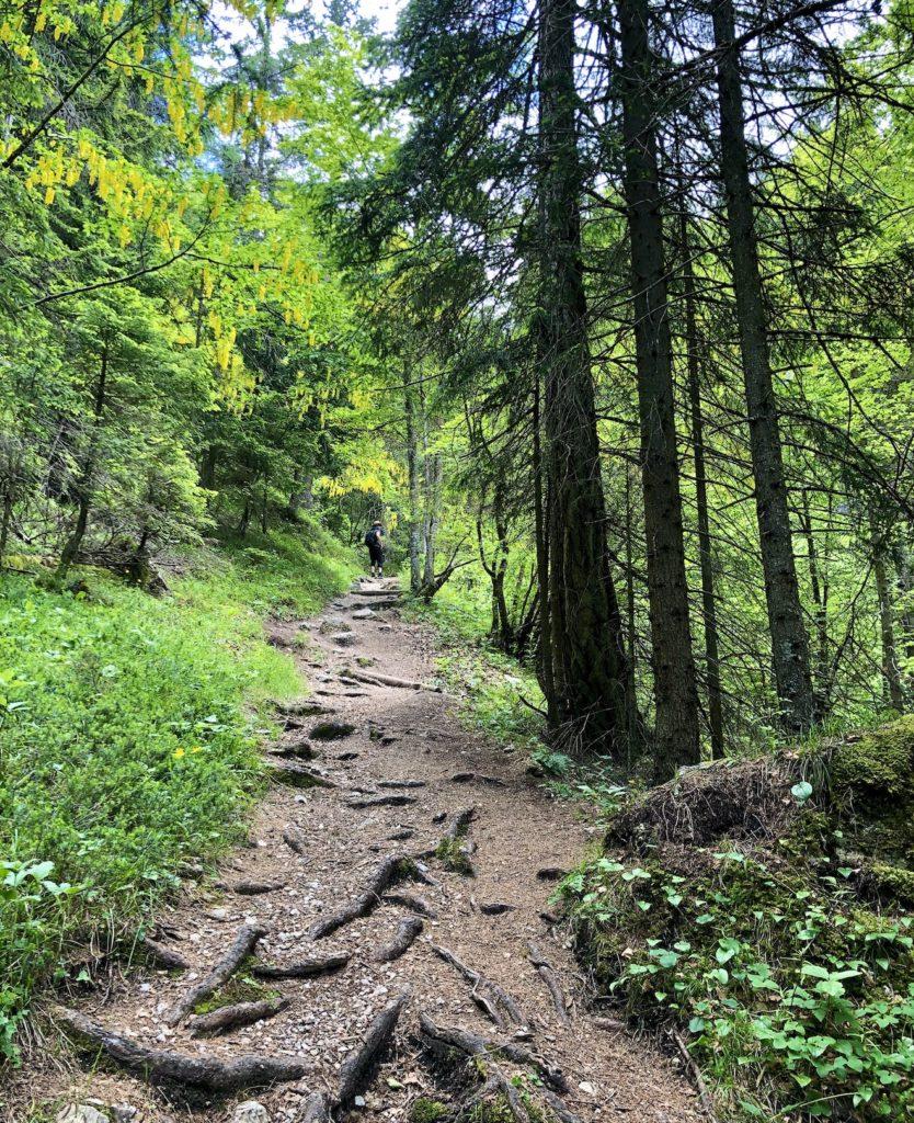 sentiero per cascata tovel