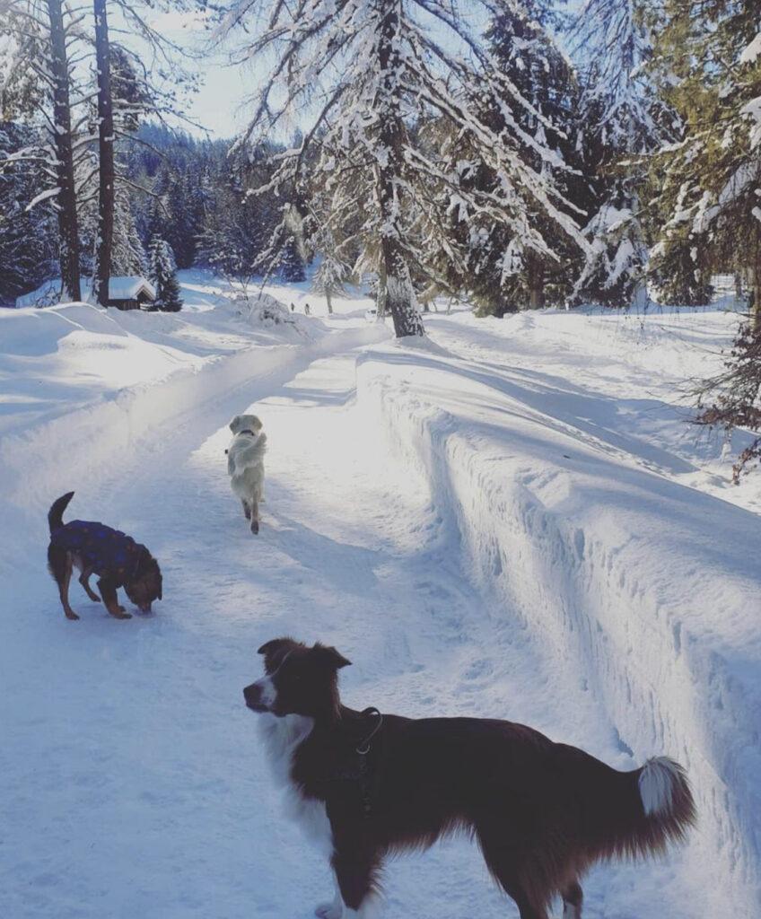 percorso per malga di romeno inverno