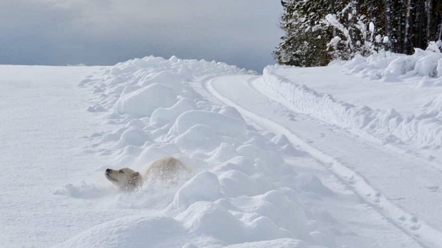 pradiei neve fresca