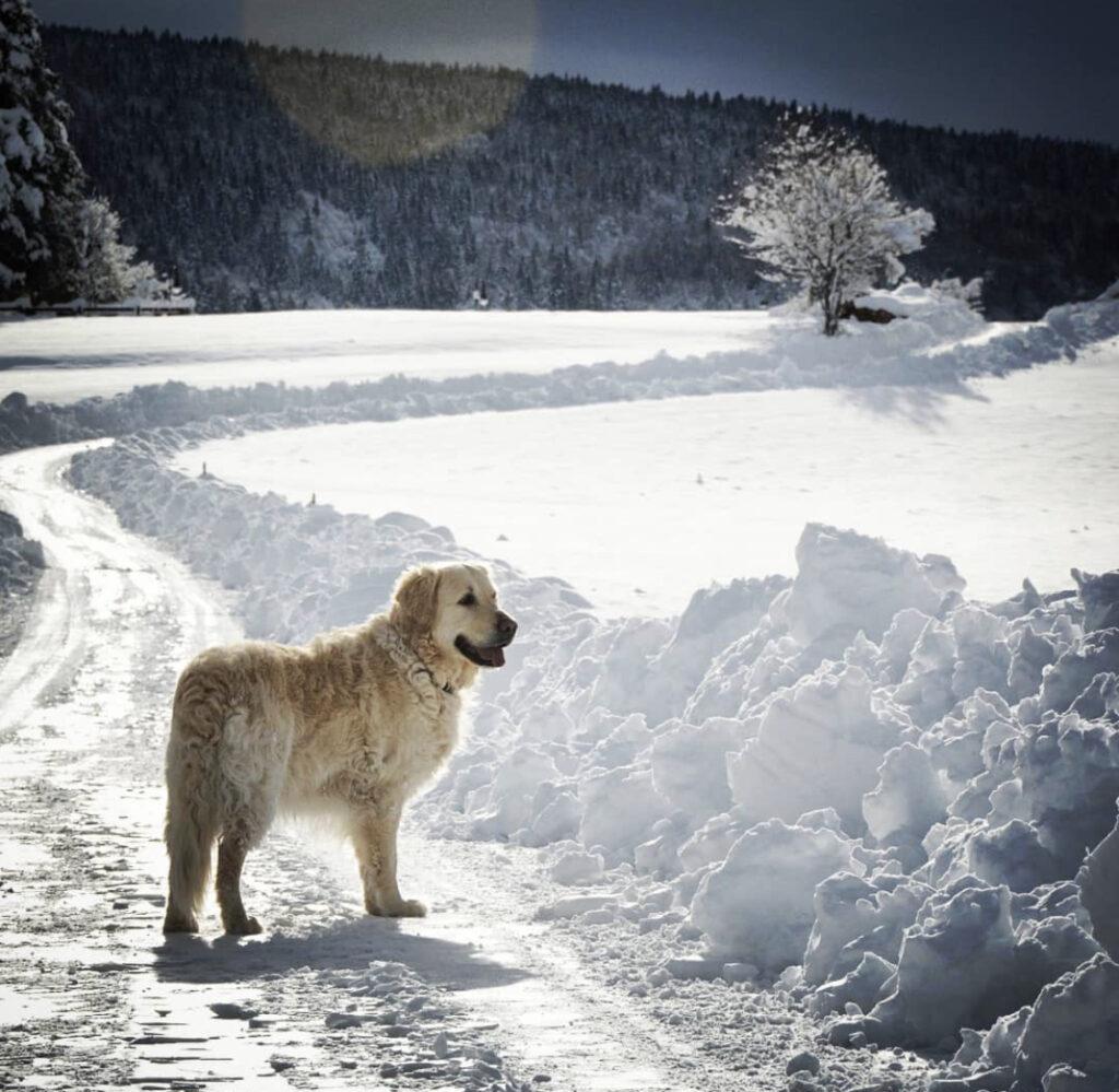 pradiei inverno val di non