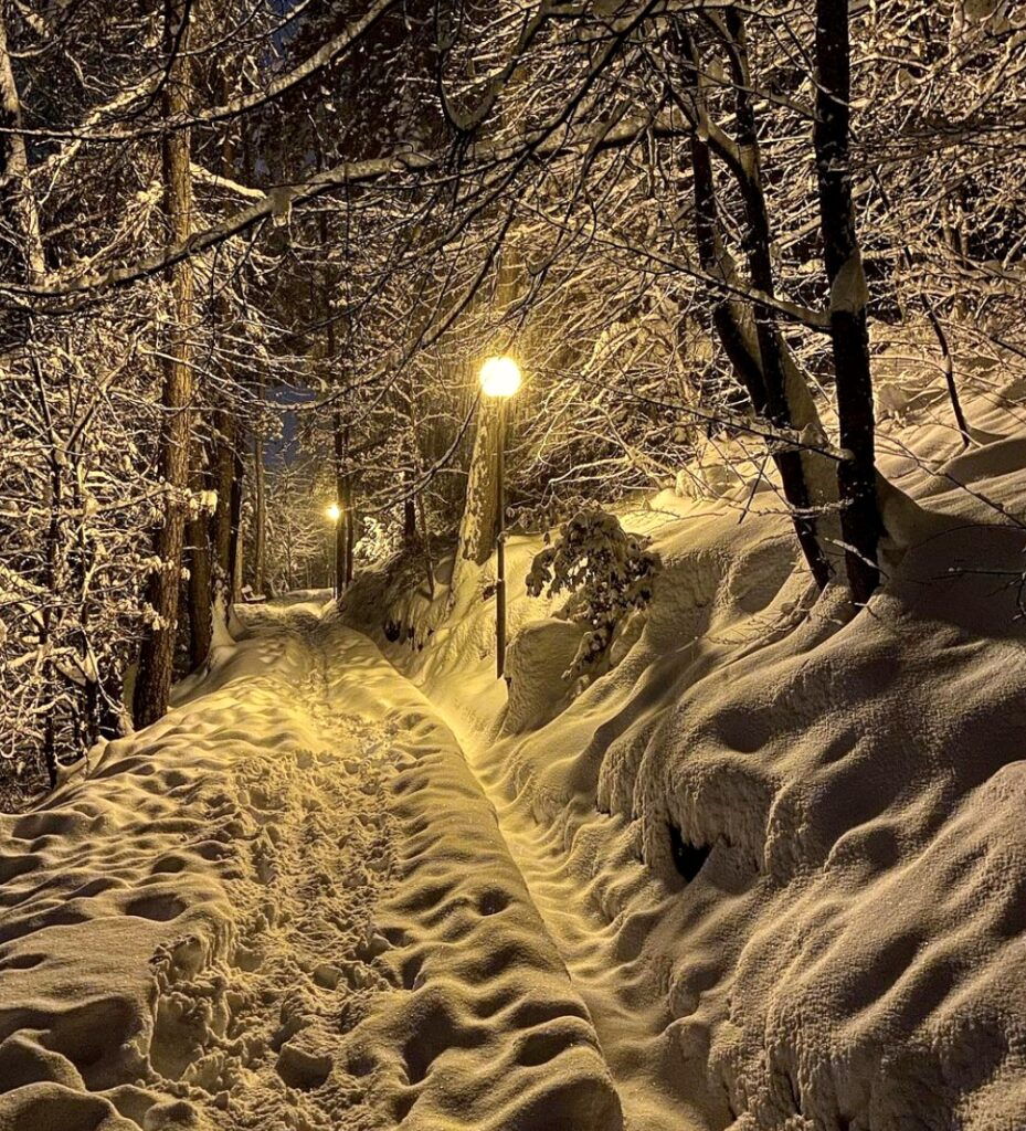 viale dei sogni con la neve