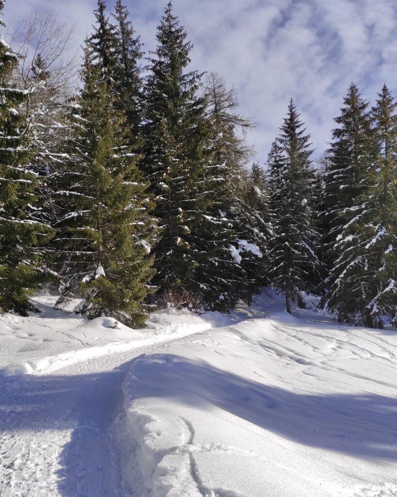 strada forestale per malga rodeza inverno